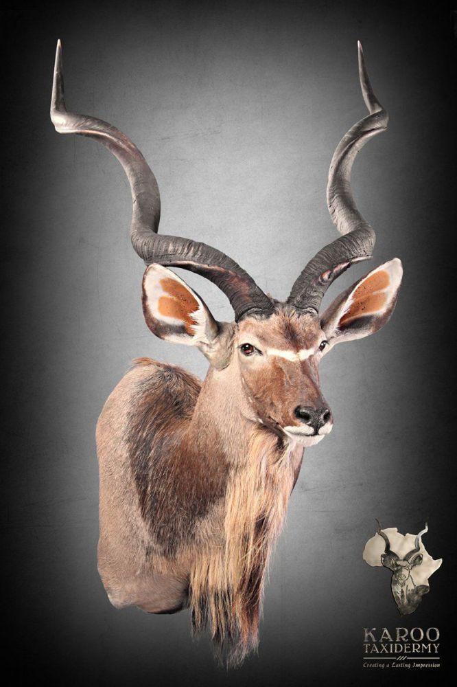Kudu Mounts