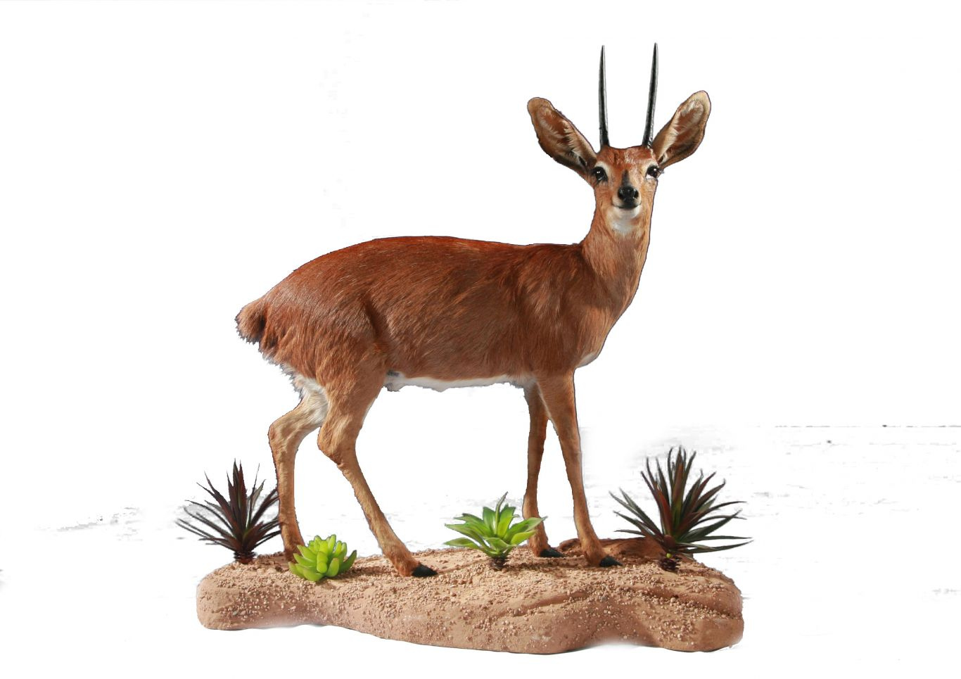steenbuck_full_mount1731521775_resize